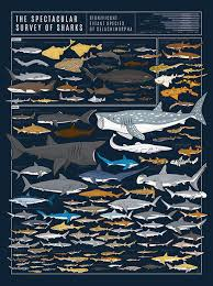 Types Of Sharks Chart This Diagram Of Deepwater Denizens Features Nearly 130