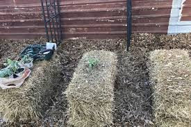 the good thing about hay bale gardening is that it allows you to grow flowers herbs and seasonal vegetables in a space that could otherwise not have held