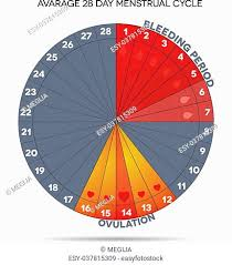 Menstrual Cycle Fertility Chart Stock Photos And Images