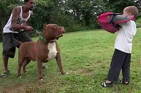 Pitbull Puppy Growth Chart Giant Pit Bull Has Puppies And Its All Kinds Of Wrong