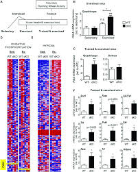 Cryptochromes Limit Exercise Induced Activation Of Ppard A
