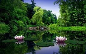 Green Nature Wallpaper #6919026