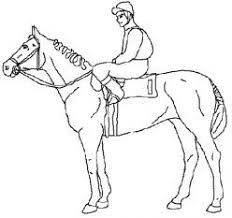 Small Picture 73 best horse lessons images on Pinterest Horse camp Horse