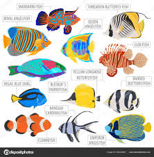 Freshwater Fish Identification Chart Freshwater Aquarium Fish Breeds Icon Set Flat Style Isolated