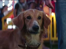 a dog s purpose bailey. Exellent Bailey A Dogu0027s Purpose Bailey Notices New Smell On Ethan Clip 2017  Video  Detective With Dog S Purpose D