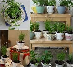Indoor Herb Garden Ideas. 1. TeaCup Herb Garden