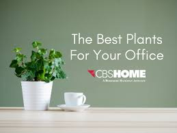 office plants for sale. Perfect Plants Best Indoor Plants For Your Office  CBSHOME Intended For Sale