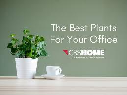 Best indoor plants for office Tall Best Indoor Plants For Your Office Cbshome Hgtvcom Best Indoor Plants For Your Office Real Estate Omaha Nebraska News