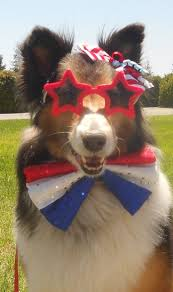 1819 best images about Dog days on Pinterest Dogs Animals and.