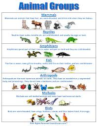 Animal Classification Chart Super Subjects Super Science Life Science Animal