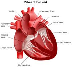 how to prevent heart diseases with  simple home remediescauses of valvular heart disease