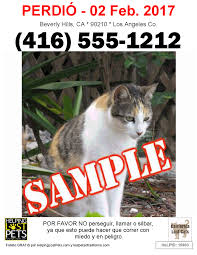 Lost Cat Flyer Lost Or Found A Pet Helping Lost Pets Now Offers Free Multi