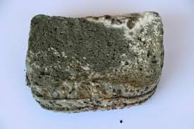 Mold Bread Morphology And Reproduction Of Black Bread Mold Mold