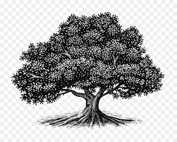 Oak Tree Drawing Png Download 14001120 Free Transparent Tree