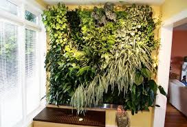 Indoor Living Wall living plant walls - los angeles indoor green wall at  healthcare