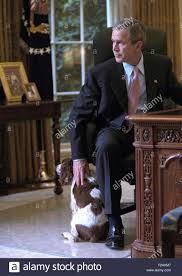 bush oval office. President George W. Bush Pets Spot In The Oval Office Of White House. Oct. 1, 2001. (BSLOC 2015 2 170)