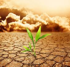 soil pollution short paragraph essay on causes of soil pollution  soil pollution