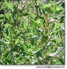 essay on medicinal plants essay medicinal plants essay marketplace