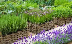 Small Picture How to design a productive garden The Telegraph