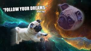 doge taco follow your dreams. Contemporary Your Throughout Doge Taco Follow Your Dreams