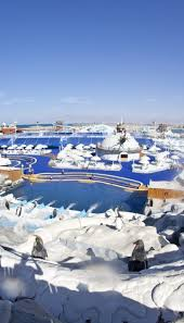 Ice Land Water Park Dubai Tickets Attractions Reviews More