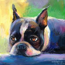 boston terrier dog painting pensive boston terrier dog painting by svetlana novikova
