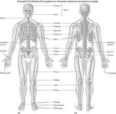 Anatomy Quiz On Bones - Geoface #e330a7e5578e