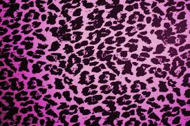 wallpapers for colorful animal print desktop backgrounds