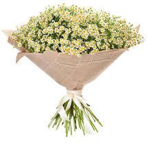 <b>Букет</b>-<b>соло</b> Ромашки для чудесной девушки (25,35,51 или 75 ...