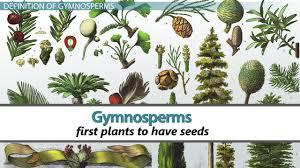 gymnos characteristics definition types