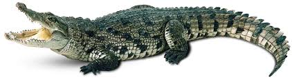 Картинки по запросу крокодил