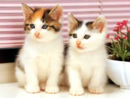 「twin cats」の画像検索結果