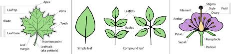 Plant Species Identification Using Computer Vision
