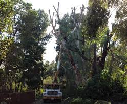 services offered in tustin robu0027s tree robs tree service f87