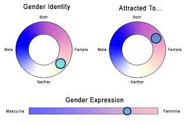 Bluebeads Tumblr I Found This Cool Little Gender Identity
