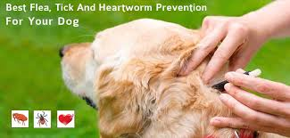 Choose The Best Flea Tick And Heartworm Prevention For Dogs