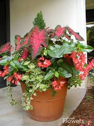 Potted Plants For Shade  Flowers  Pinterest  Plants Gardens Container Garden Shade Plants