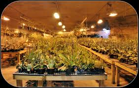 12 DIY Homemade Grow Boxes To Control The Growing Environment Perfect Grow Room Design