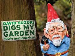 suzuki garden gnomes showcase chemical free gardens across bc