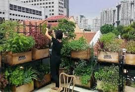 rooftop farming how urbanites are