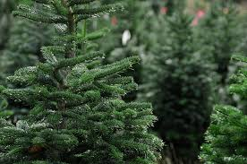 Find The Right Artificial Christmas Tree Size  Balsam HillWhat Kind Of Christmas Trees Are There