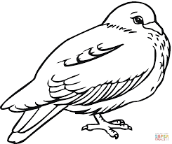 Small Picture Pigeon 5 coloring page Free Printable Coloring Pages