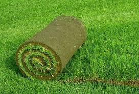 Натуральный газон