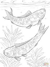 Small Picture Pike Coloring Pages Coloring Coloring Pages