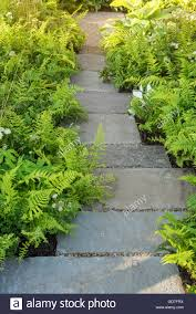 garden paths and stepping stones. borders of ferns and white astrantia edge a stepping stone garden path. paths stones