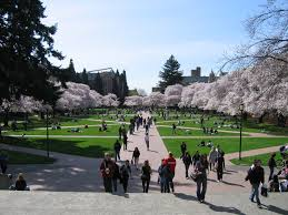 how to write the university of washington essays