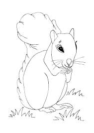 Squirrel Coloring Pages Interesting Squirrel Coloring Pages To Keep