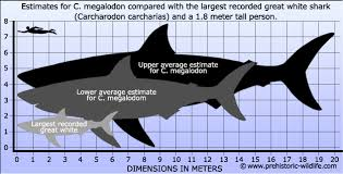 megalodon shark compared to killer whale. Fine Whale How Much Shark Fin Soup Could You Make From An Adult Megalodon  Southern  Fried Science For Megalodon Shark Compared To Killer Whale