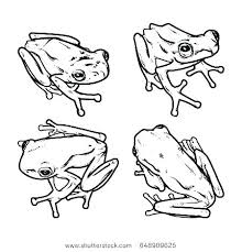 tree frog template printable frog pictures frog printable coloring pages toad and page