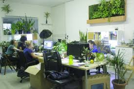 office greenery. The Greenery NYC Offices. Office